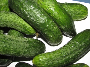cucumbers suitable for fermentation